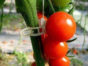 Auvsta Plante Clips, 538g Clips Clips, plastique, pinces, clips à suspendre, clips de vigne, Vigne Clipsplant Clips support tomates, poivrons, Vigne plantes et fleurs de développement Droit, (100pces) de la marque AUVSTAR image 0 produit
