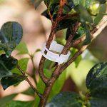 BulzEU 200pcs Jardin plantes Clips Fleur Clips de Fixation- Clips de Support Idéal pour sécuriser les plantes au Plante Prend en Charge–Blanc de la marque BulzEU image 3 produit