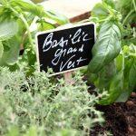 étiquette plante TOP 0 image 4 produit