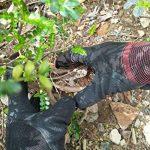 gants caoutchouc noir TOP 13 image 1 produit
