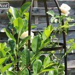 GardenMate® Obélisque Bronze massif Ø 35cm Hauteur 190cm acier (Revêtement par poudre de la marque GardenMate image 3 produit