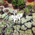 Gosear® Étiquettes de Plante, Gosear 100 Pièces Etiquettes en Plastique Jardin+ Noir Stylo marqueur,T-Shape plugs Semis Etiquette de la marque Gosear image 4 produit