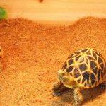Greenhouse Terreau Litières Substrat Brique Fibre de Coco pour Reptiles et Amphibiens-5 Tailles à Choisir - marron, 100 x 40cm de la marque Générique image 1 produit