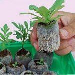 Jiffy Granulés de graines de compost Plug pour l'intérieur ou serre de Transplantation droite pour Garden (50ct–25mm) de la marque Generic image 1 produit