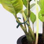 Lot de 100clips pour plantes de jardin Vigne Clips de fixation clips pour support de souches végétales de la marque KINGLAKE image 2 produit