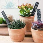 Navaris Set de 10 étiquettes en ardoise - pour plantes taille M - Matériel jardinage signets inscriptibles 20 x 3cm pour jardin ou balcon avec craie de la marque Navaris image 2 produit