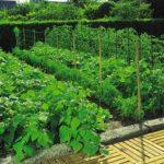Nutley's Lot de pois et haricots 10x 2m–Vert de la marque Nutley's image 1 produit