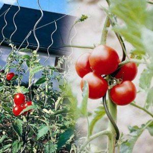 OSE Tuteur à tomate avec chas - Par 5 - Gris de la marque OSE image 0 produit