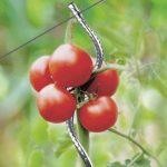 OSE Tuteur à tomate avec chas - Par 5 - Gris de la marque OSE image 1 produit