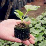 Ounona 50pcs Granulés de tourbe compressée tourbe du sol Start plantation en intérieur pour planter au jardin ou pot de fleurs Pot de fleurs de la marque OUNONA image 1 produit