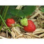 Paillage Bois +/- 1M² - Naturel - Livraison Gratuite de la marque MPO image 3 produit