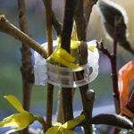 panneau plante grimpante TOP 12 image 4 produit
