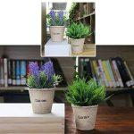 perlite plante TOP 3 image 3 produit