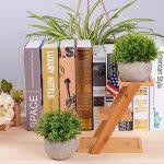 perlite plante TOP 7 image 3 produit