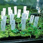 Qiorange 100 Pièces 100 mm Plastique étiquettes de Plantes / Marqueur de Jardin , Multicolores (100 Pcs Blanc A) de la marque Qiorange image 2 produit