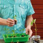 ROMBERG Lot de 100 pots 71100 - En tourbe de la marque ROMBERG image 1 produit