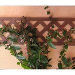 Set de 2 treillis en BOIS COMPOSITE 1x0,25 m. Couleur bois naturel. Marque: B Cottage de la marque Botanyland image 2 produit