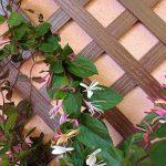 Set de 2 treillis en BOIS COMPOSITE 1x0,50 m. Couleur bois naturel. Marque: B Cottage de la marque Botanyland image 1 produit