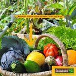 Solabiol SOLICOMP1 Engrais Complet Liquide 1L Prix Choc, Marron, 1 L de la marque Solabiol image 5 produit