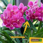 Solabiol TERORC6 Terreau Orchidées, Brun, 6 L de la marque Solabiol image 2 produit