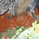 substrat de coco jardinage TOP 9 image 2 produit