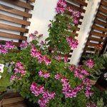 support mural plante grimpante TOP 10 image 4 produit