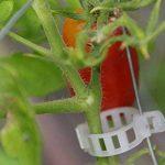 support plant de tomate TOP 8 image 4 produit