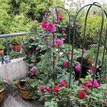 support pour rosiers grimpant TOP 11 image 3 produit