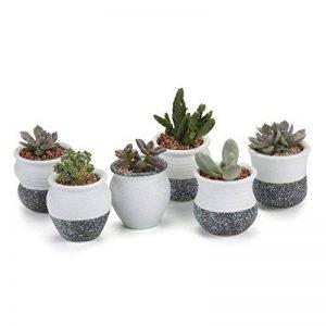 T4U 6CM Pots en Céramique Série Kit flocon de neige/Pots à Fleurs/ Cactus Plant De Pots/Cultiver Les Jardinières 1 paquet de 6 de la marque T4U image 0 produit