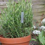 étiquette plantes au jardin TOP 1 image 2 produit