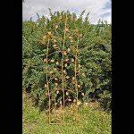 Treillage feuilles de la marque Jardins-dHiver image 0 produit