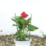 tuteur acier tomate TOP 4 image 4 produit