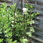 tuteur pour plante TOP 4 image 1 produit
