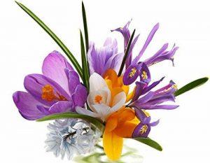 un pcs bulbes de safran de fleurs, bulbes de safran Crocus, ce sont les bulbes de safran (Pas d'semences de fleurs) pour fleur plante de jardin de la maison de la marque SVI image 0 produit